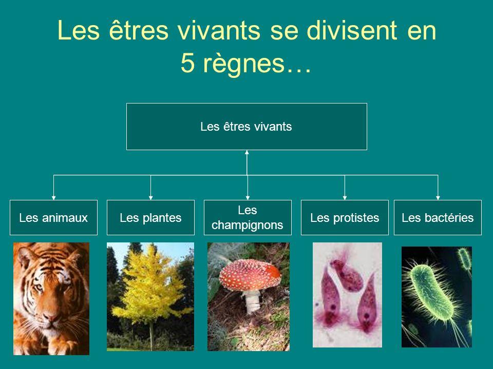 Les êtres vivants se divisent en 5 règnes…