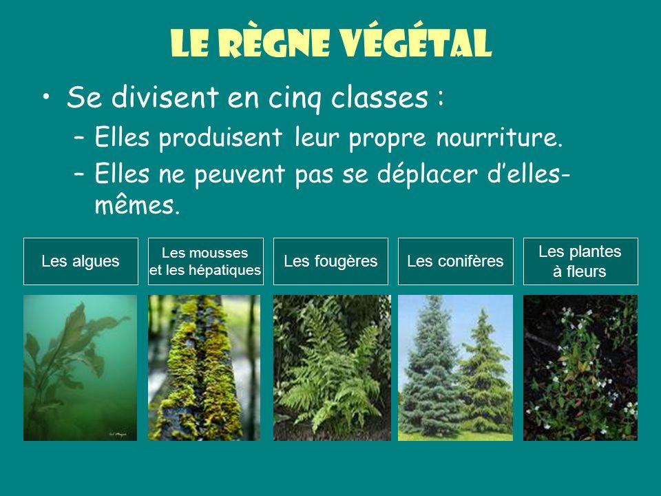 Le règne végétal Se divisent en cinq classes :