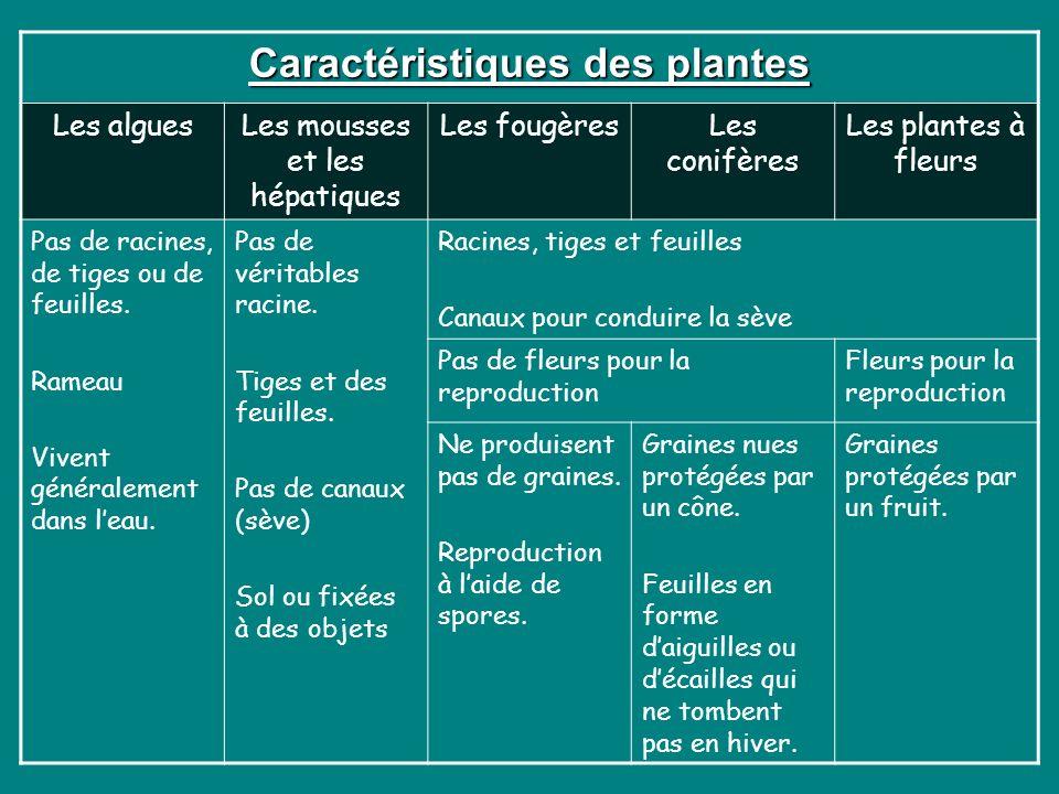 Caractéristiques des plantes