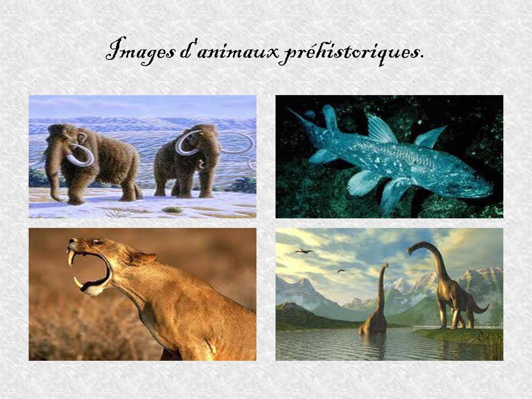 Images d animaux préhistoriques.