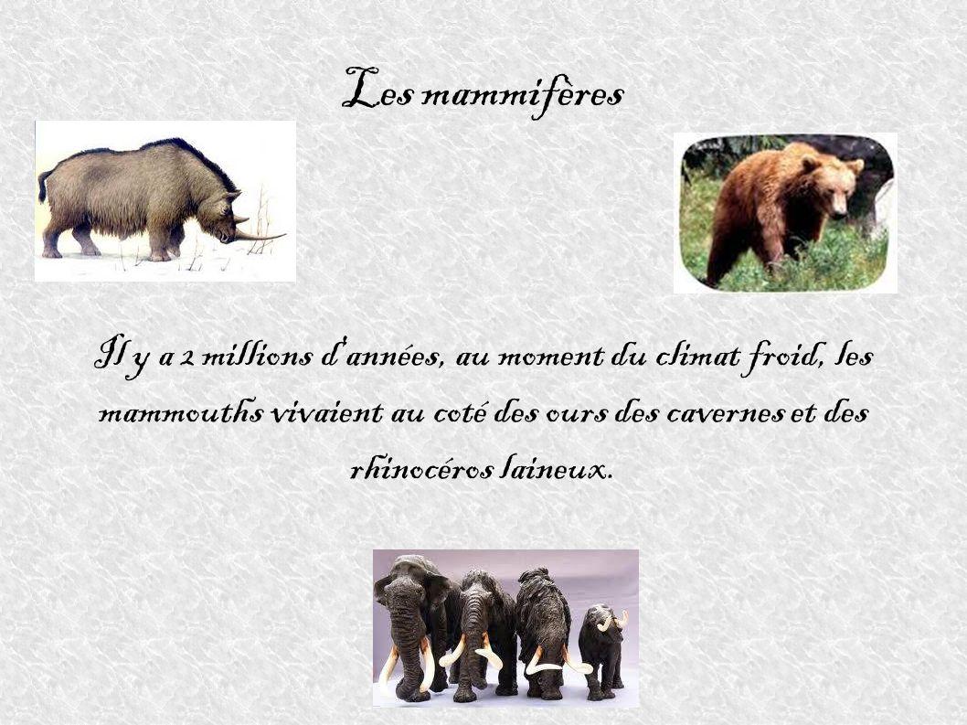 Les mammifèresIl y a 2 millions d années, au moment du climat froid, les mammouths vivaient au coté des ours des cavernes et des rhinocéros laineux.