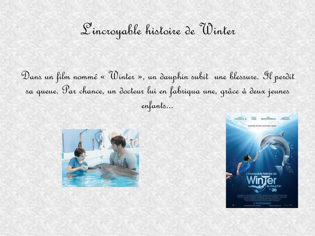 L incroyable histoire de Winter