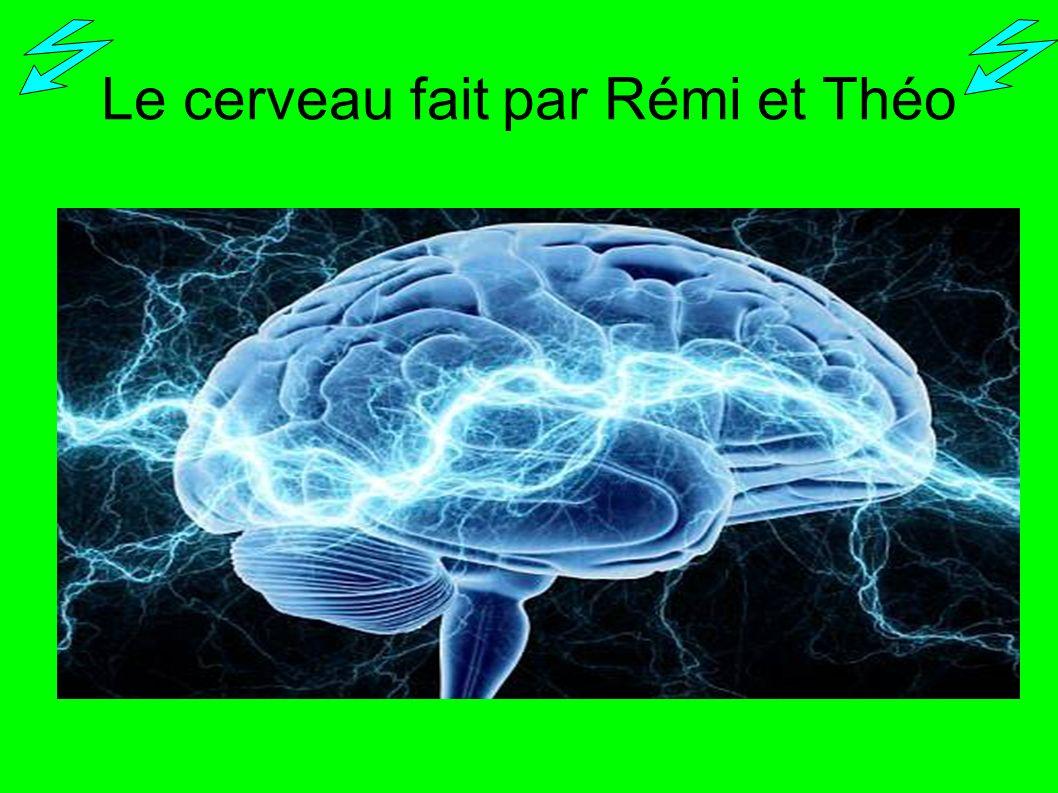 Le cerveau fait par Rémi et Théo