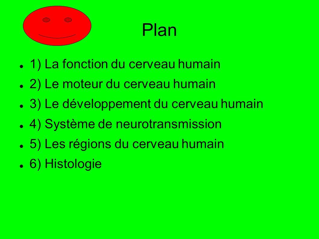 Plan 1) La fonction du cerveau humain 2) Le moteur du cerveau humain