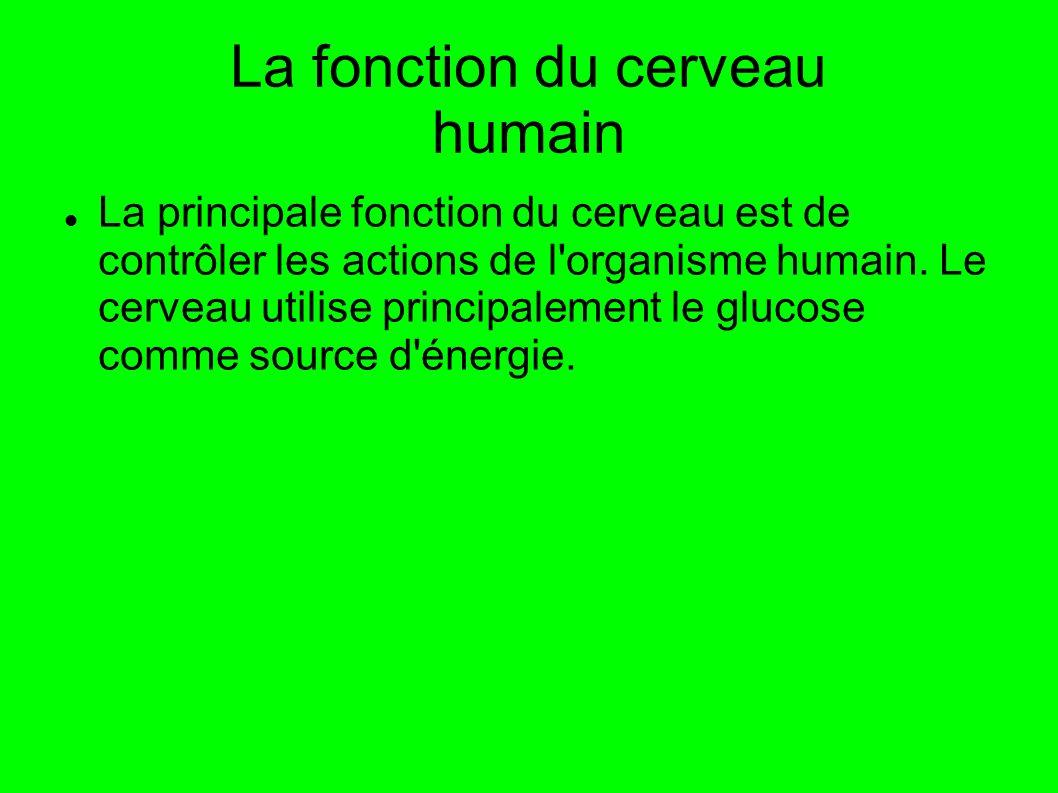 La fonction du cerveau humain