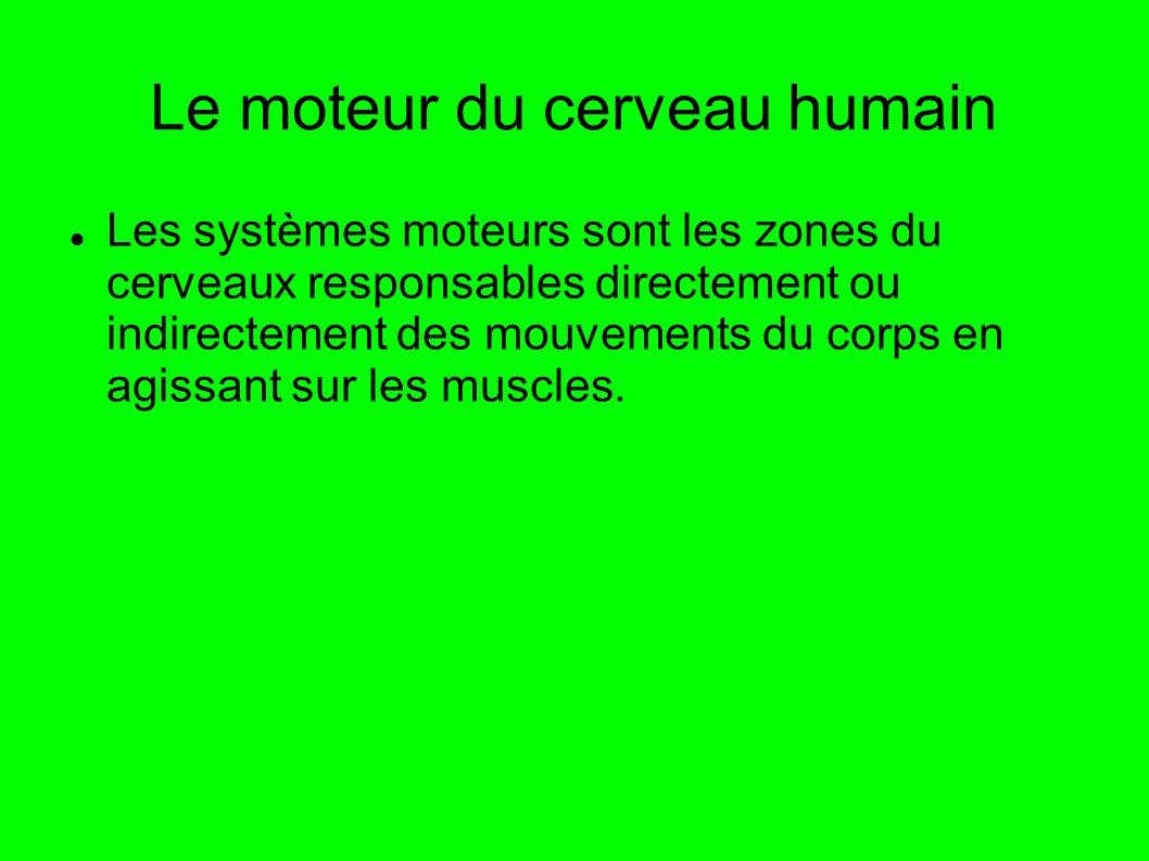 Le moteur du cerveau humain