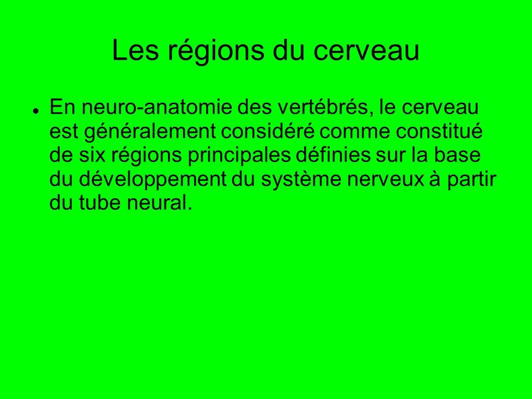 Les régions du cerveau