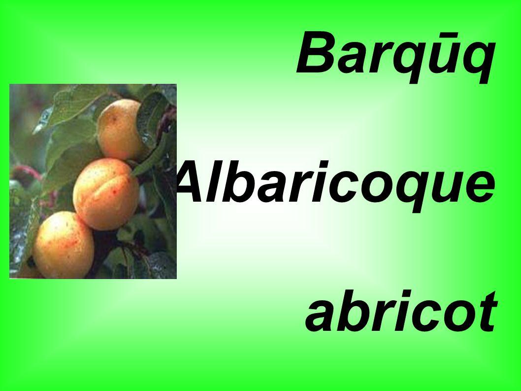 Barqūq Albaricoque abricot