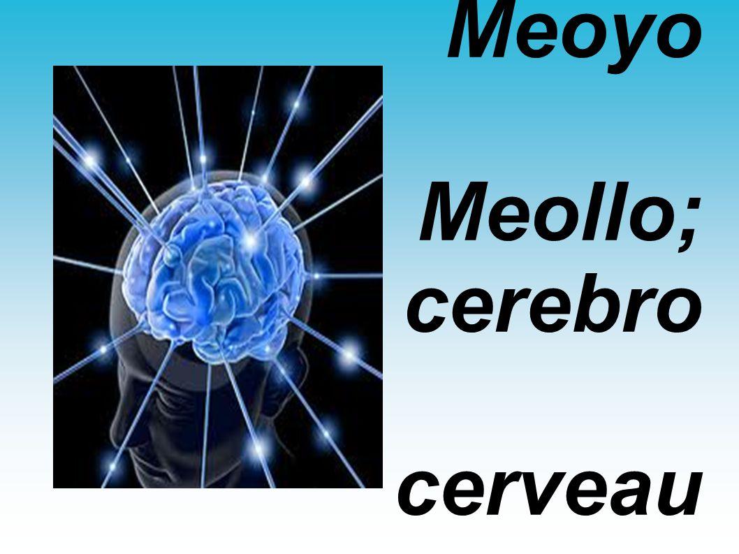Meoyo Meollo; cerebro cerveau