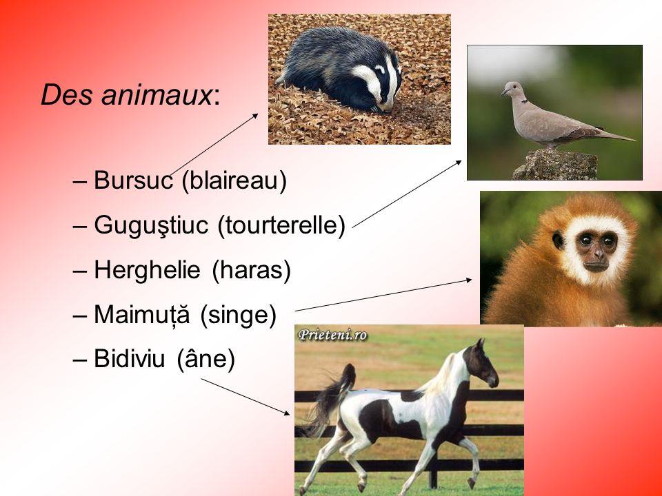 Des animaux: Bursuc (blaireau) Guguştiuc (tourterelle)