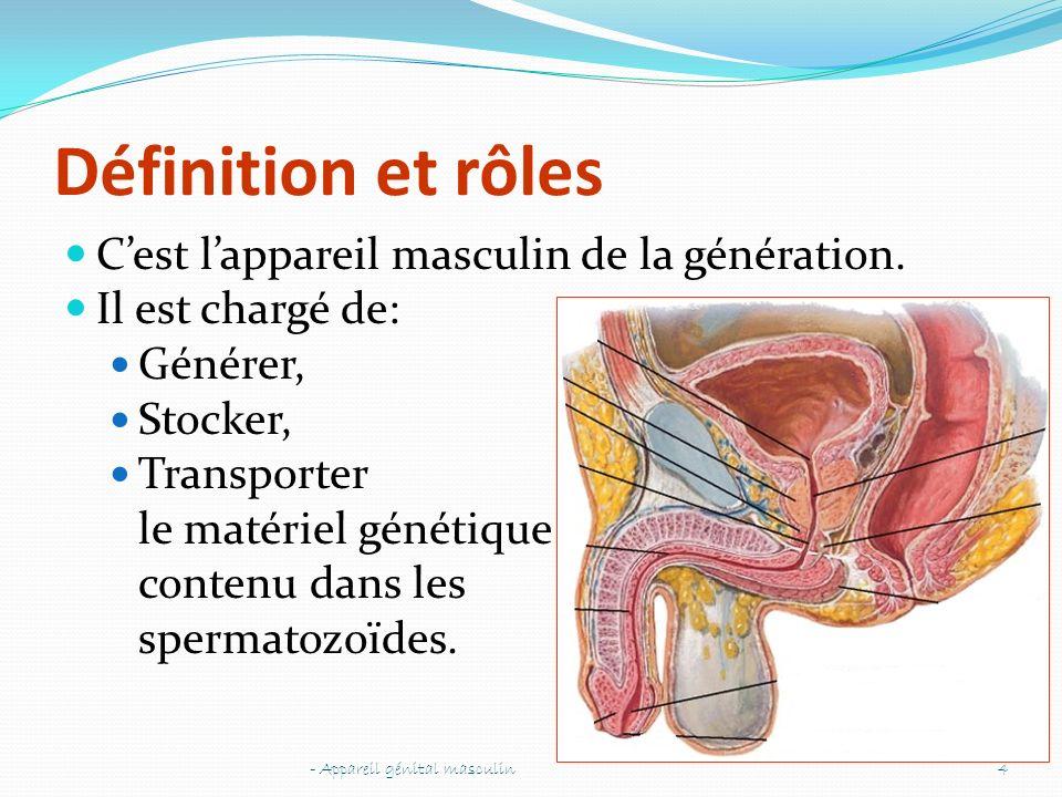 Définition et rôles C'est l'appareil masculin de la génération.