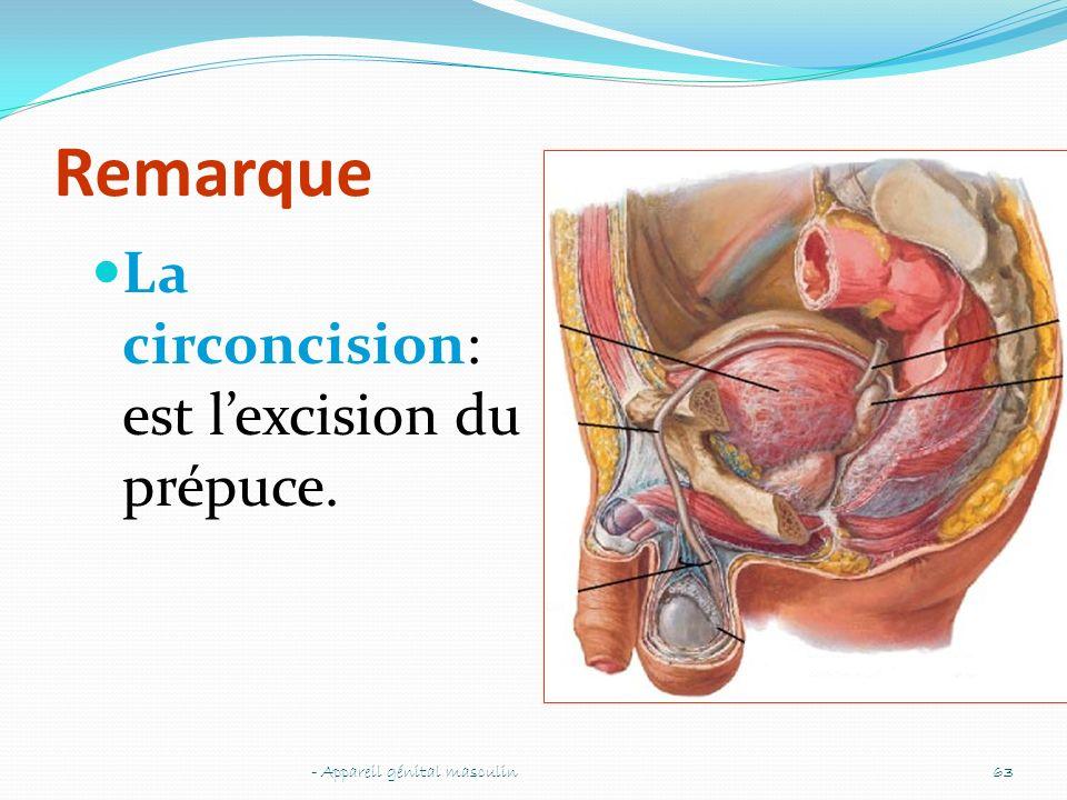 Remarque La circoncision: est l'excision du prépuce.