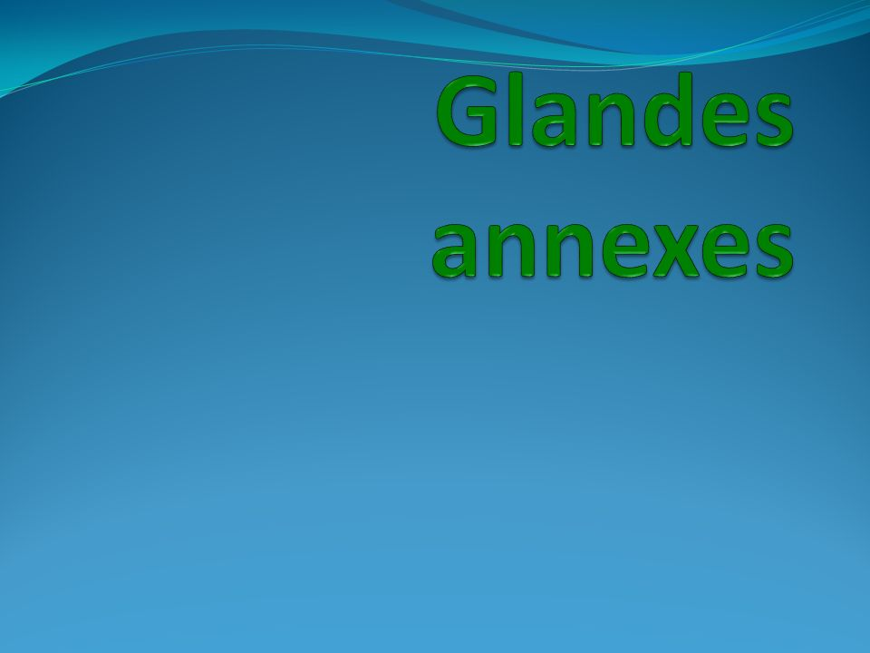 Glandes annexes