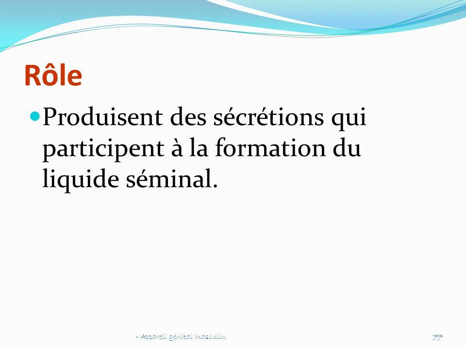 Rôle Produisent des sécrétions qui participent à la formation du liquide séminal.