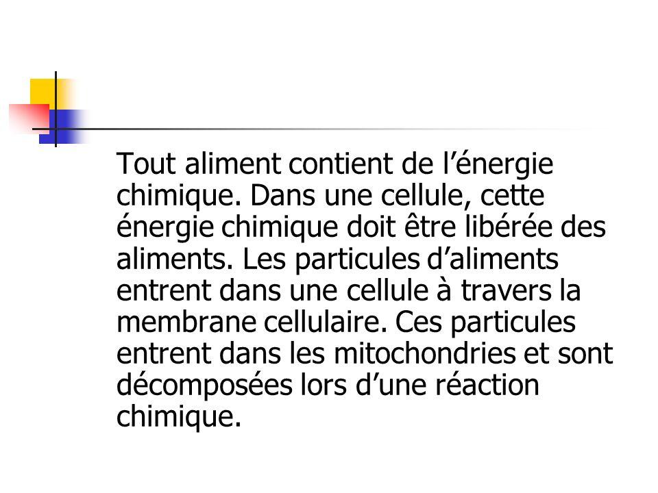 Tout aliment contient de l'énergie chimique