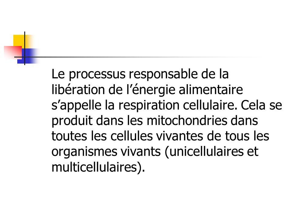 Le processus responsable de la libération de l'énergie alimentaire s'appelle la respiration cellulaire.