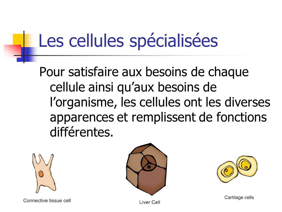 Les cellules spécialisées