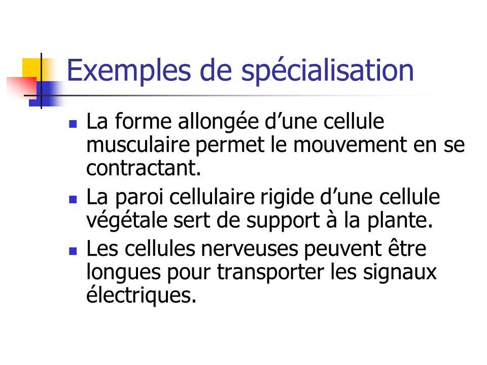 Exemples de spécialisation