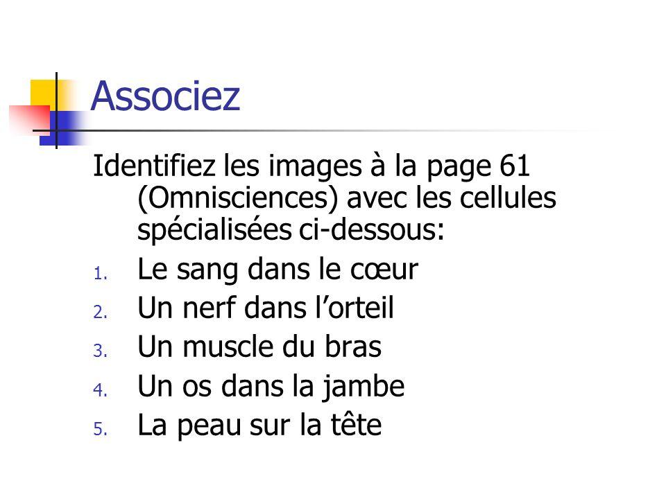Associez Identifiez les images à la page 61 (Omnisciences) avec les cellules spécialisées ci-dessous: