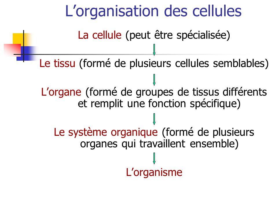 L'organisation des cellules
