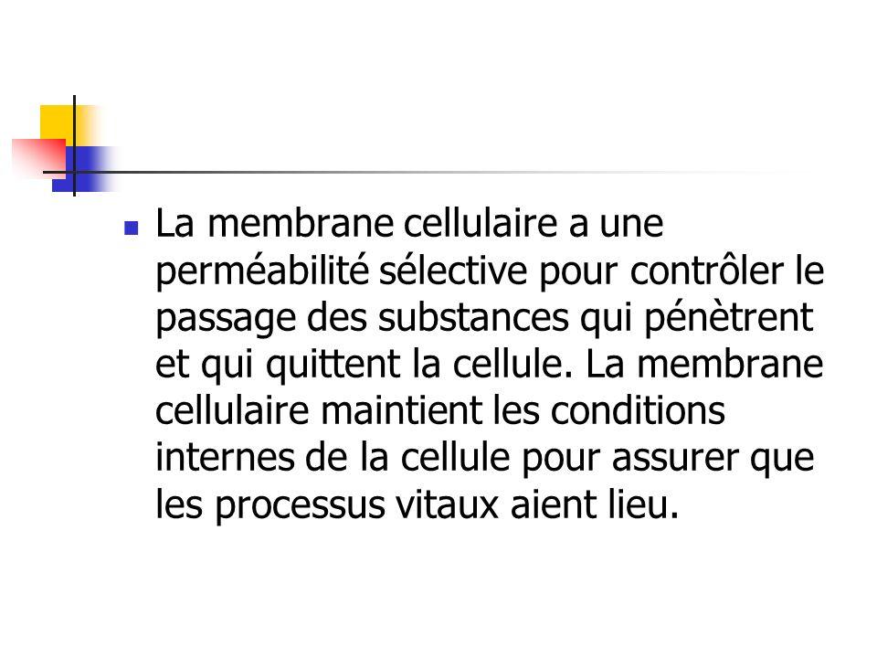 La membrane cellulaire a une perméabilité sélective pour contrôler le passage des substances qui pénètrent et qui quittent la cellule.