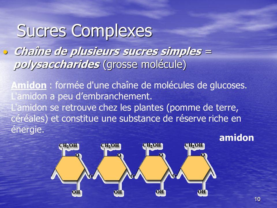 Sucres Complexes Chaîne de plusieurs sucres simples = polysaccharides (grosse molécule)