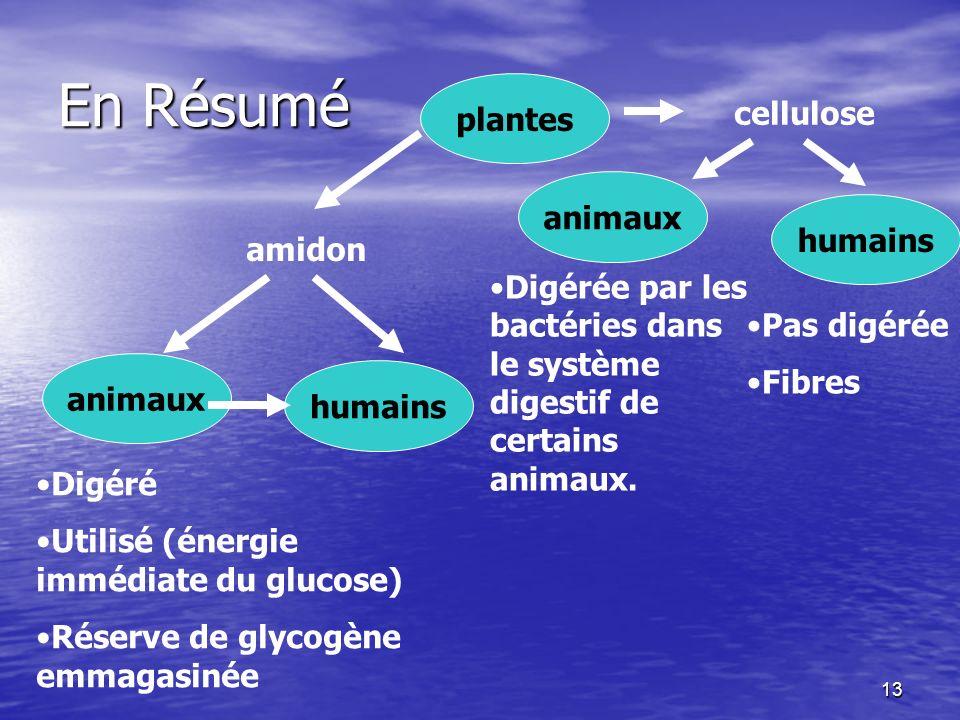 En Résumé plantes cellulose animaux humains amidon