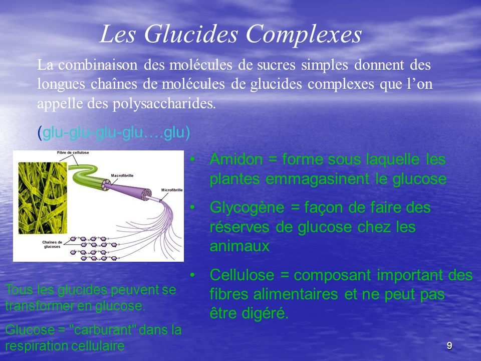 Les Glucides Complexes