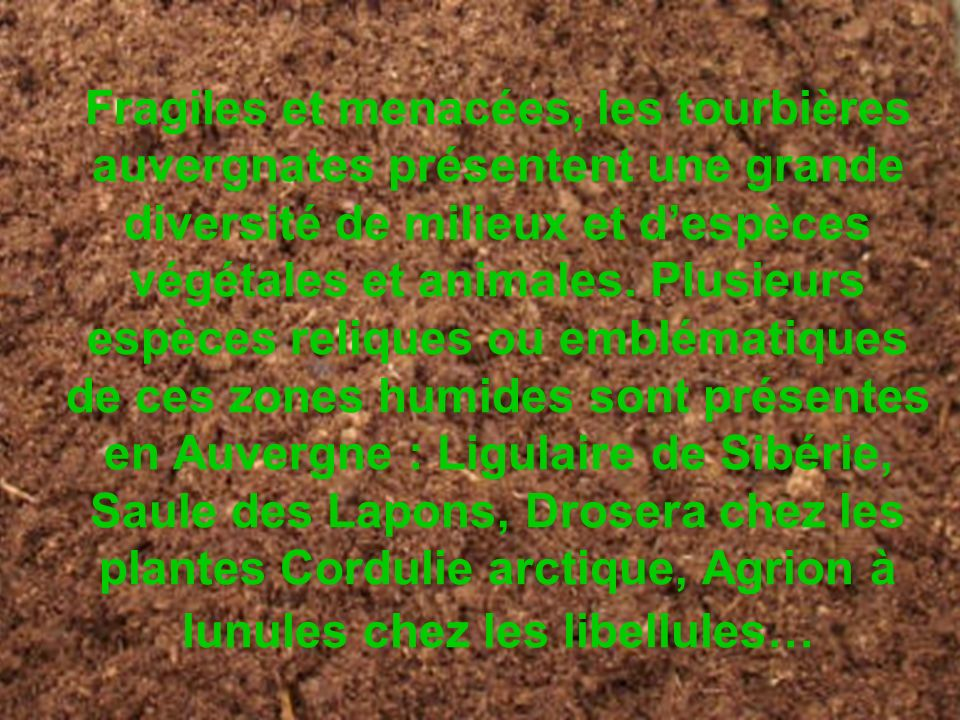 Fragiles et menacées, les tourbières auvergnates présentent une grande diversité de milieux et d'espèces végétales et animales.