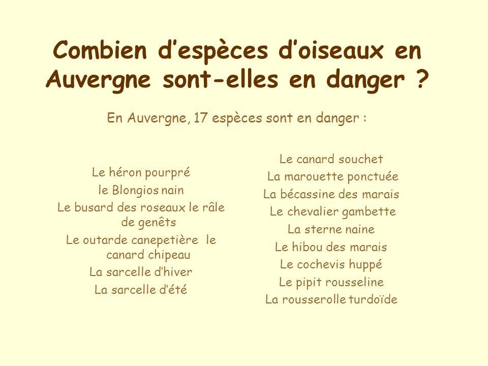 Combien d'espèces d'oiseaux en Auvergne sont-elles en danger