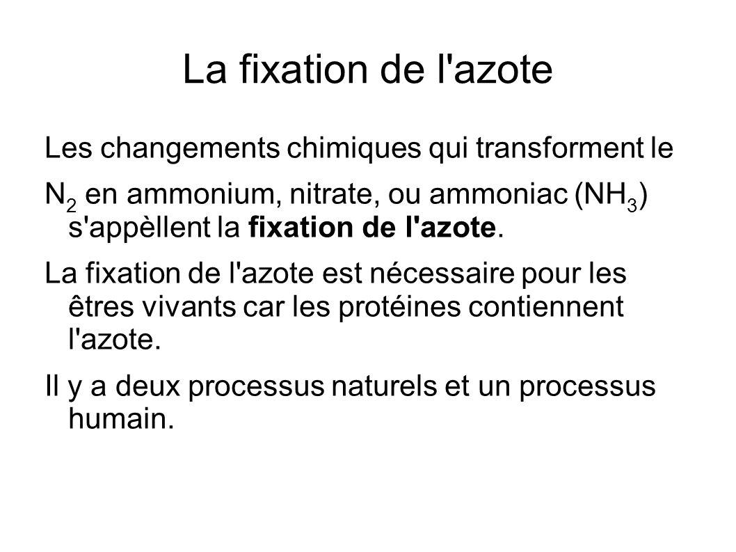 La fixation de l azote Les changements chimiques qui transforment le