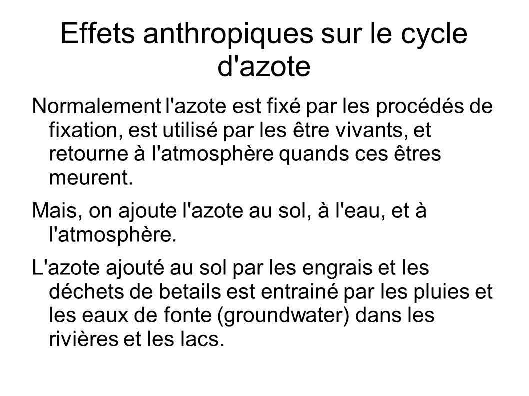 Effets anthropiques sur le cycle d azote