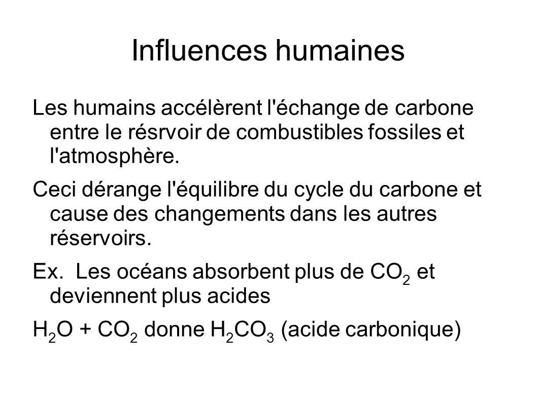Influences humainesLes humains accélèrent l échange de carbone entre le résrvoir de combustibles fossiles et l atmosphère.