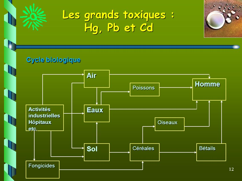 Les grands toxiques : Hg, Pb et Cd