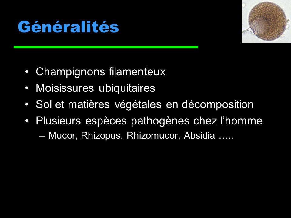 Généralités Champignons filamenteux Moisissures ubiquitaires