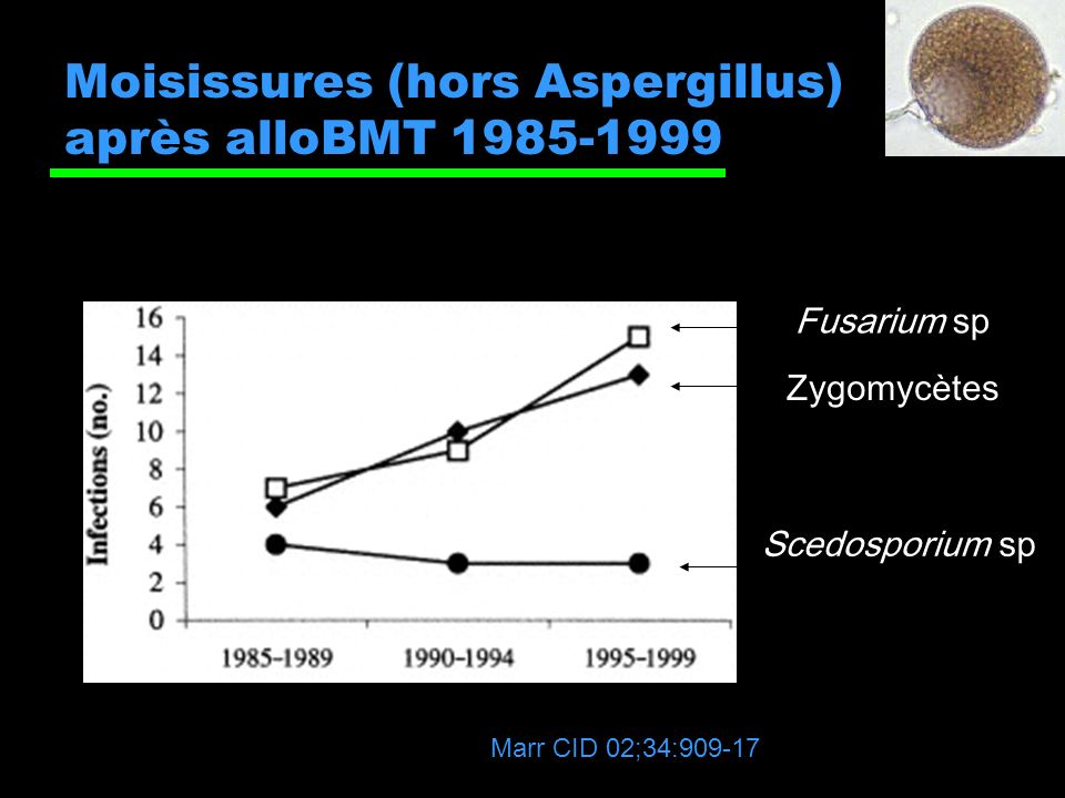 Moisissures (hors Aspergillus) après alloBMT 1985-1999