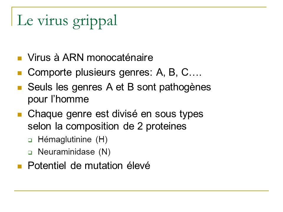 Le virus grippal Virus à ARN monocaténaire