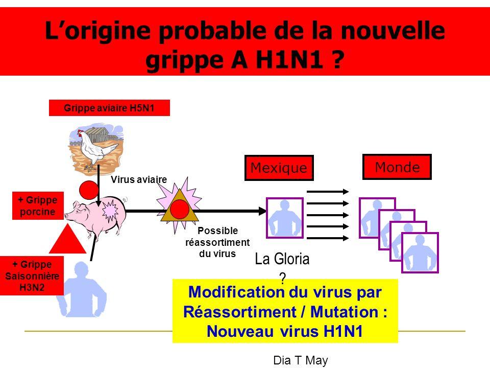 L'origine probable de la nouvelle grippe A H1N1