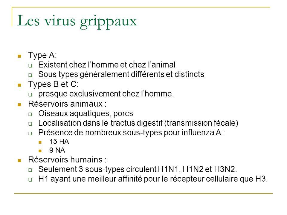 Les virus grippaux Type A: Types B et C: Réservoirs animaux :