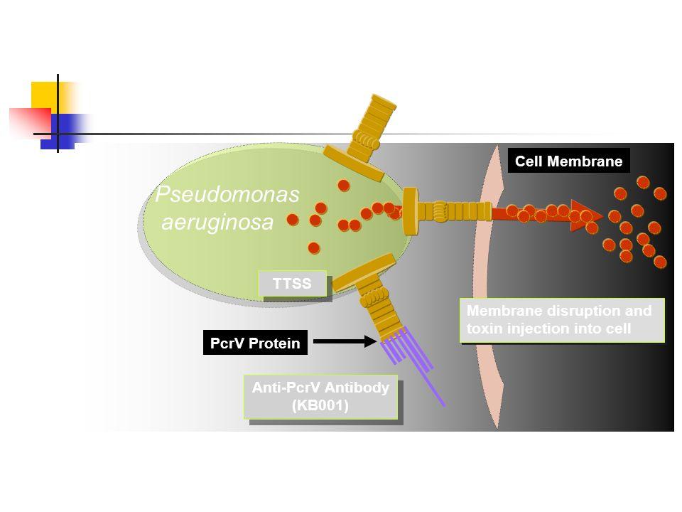 Pseudomonas aeruginosa Cell Membrane TTSS