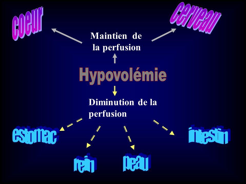 cerveau coeur Hypovolémie estomac intestin rein peau Maintien de