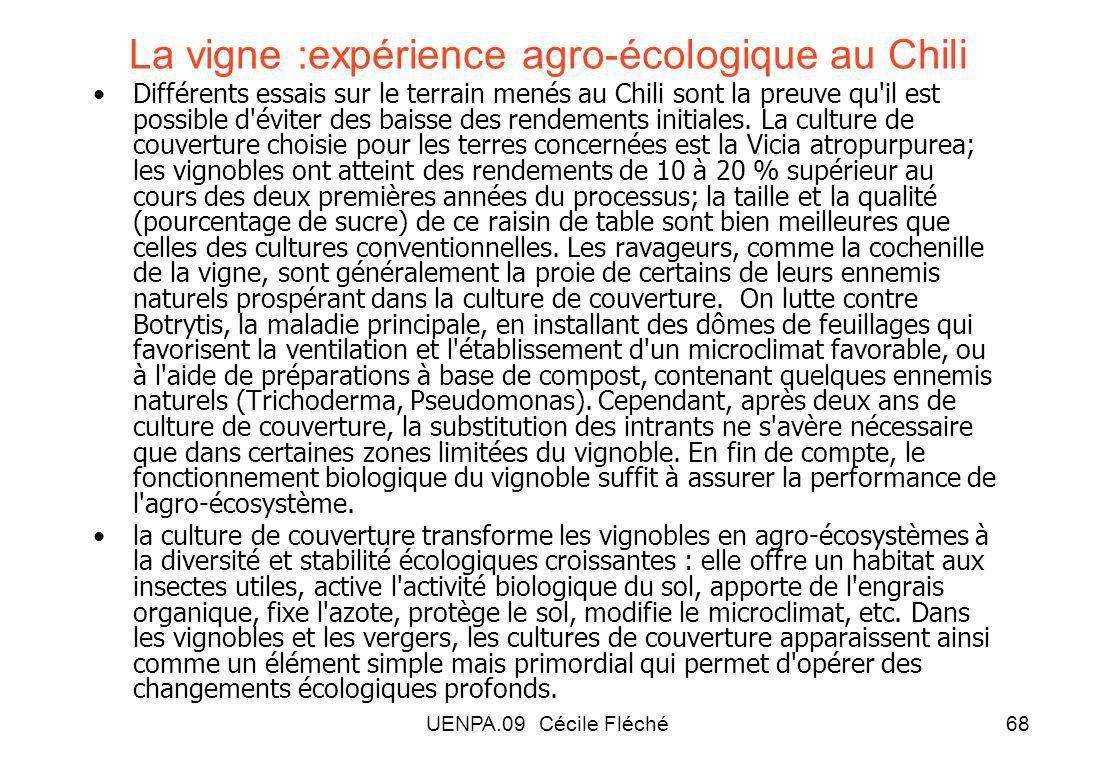 La vigne :expérience agro-écologique au Chili