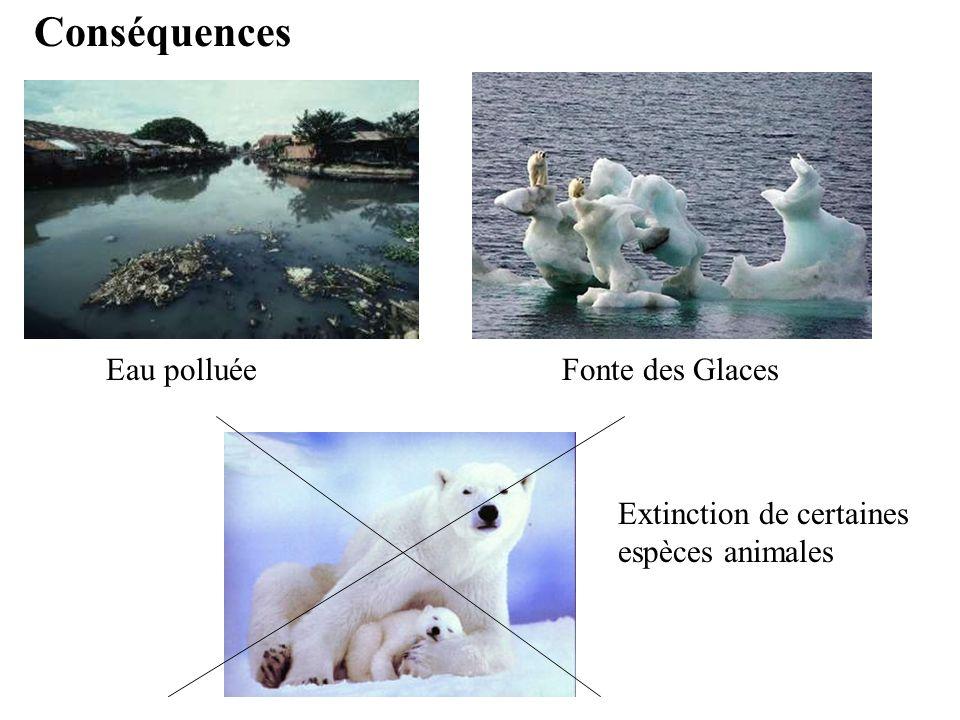 Conséquences Eau polluée Fonte des Glaces