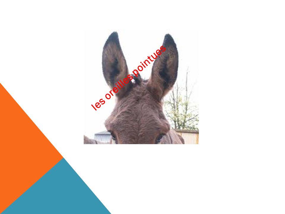 les oreilles pointues