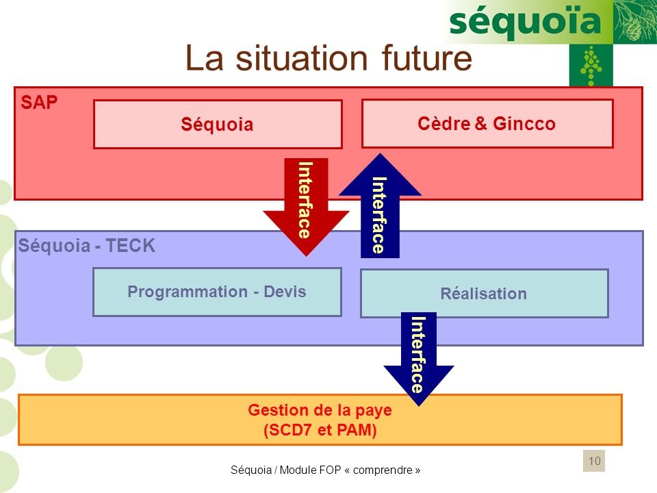 La situation future SAP Séquoia Cèdre & Gincco Interface Interface