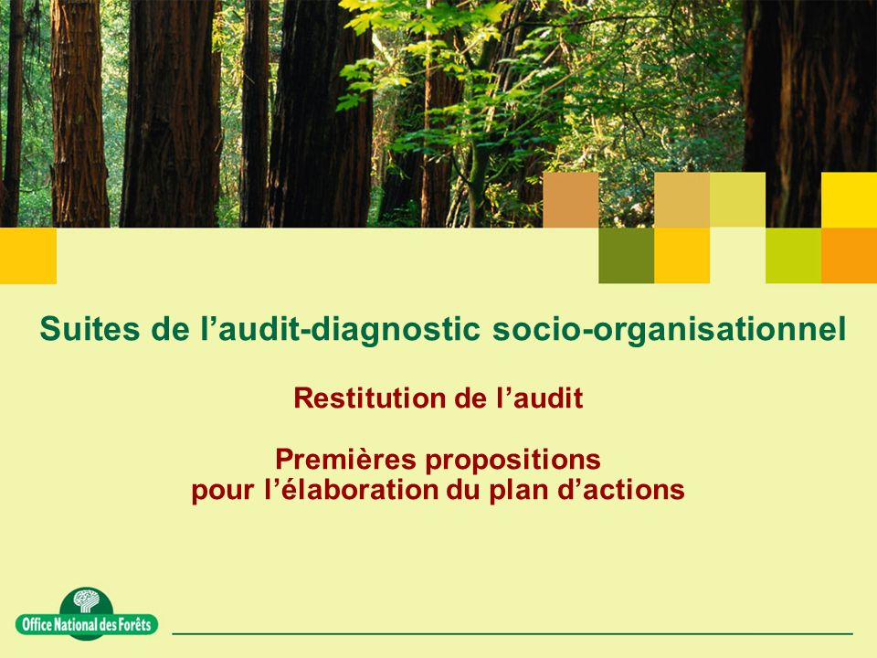 Suites de l'audit-diagnostic socio-organisationnel Restitution de l'audit Premières propositions pour l'élaboration du plan d'actions