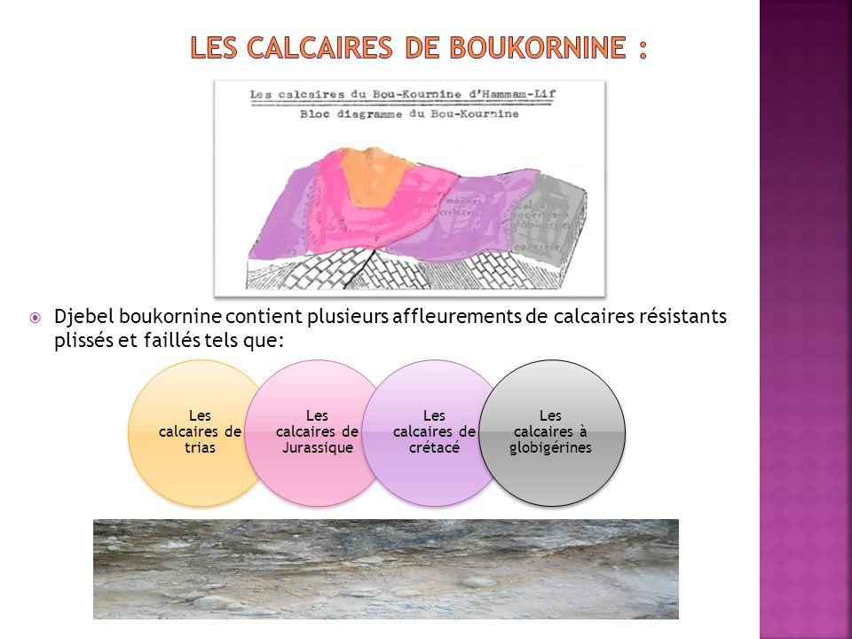 Les calcaires de boukornine :