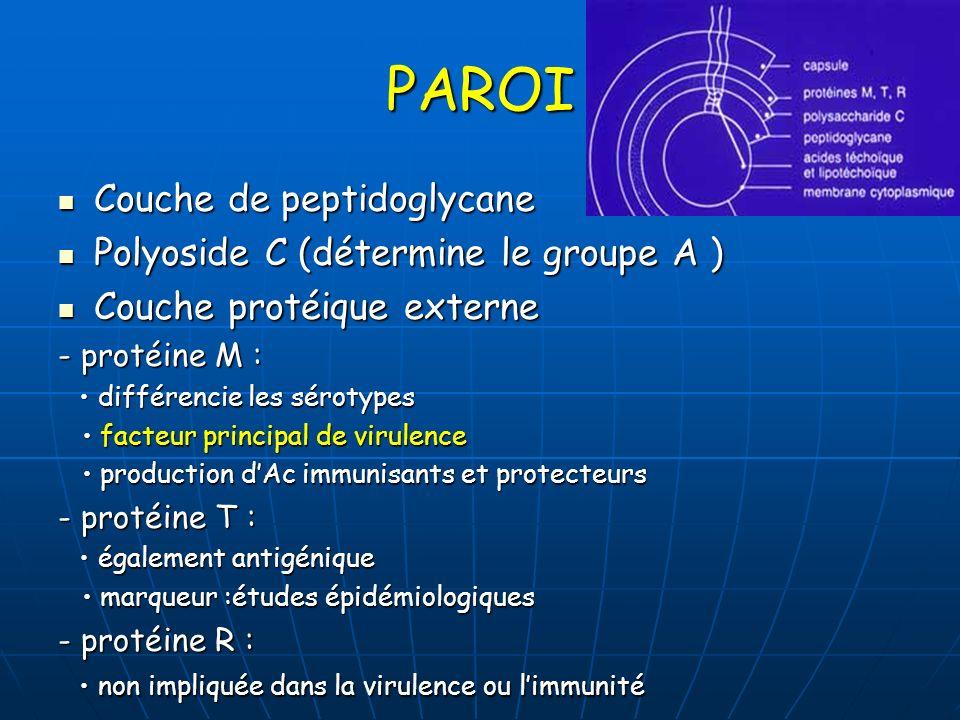 PAROI Couche de peptidoglycane Polyoside C (détermine le groupe A )