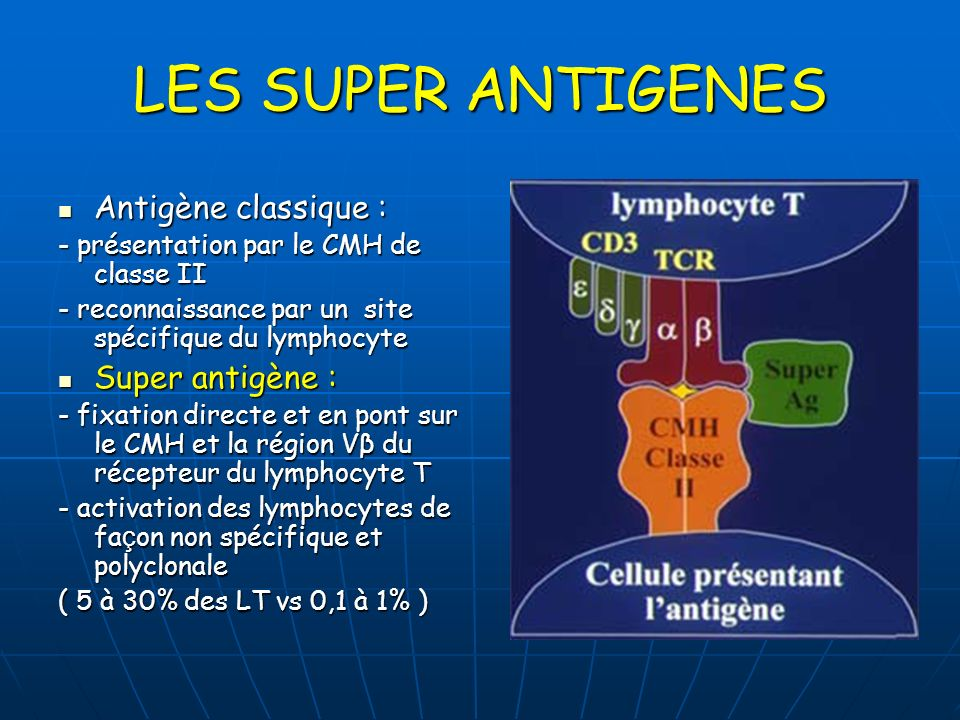 LES SUPER ANTIGENES Antigène classique : Super antigène :