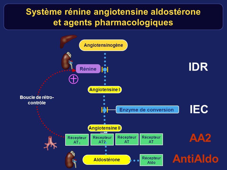 IDR IEC AA2 AntiAldo ㊉ Système rénine angiotensine aldostérone
